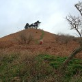 Colmer Hill on a cold Boxing Day