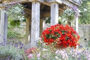 Abbotsbury Gardens