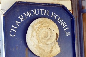 Charmouth Fossils