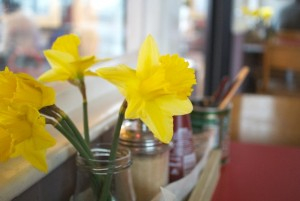 Daffodils at The Watch House