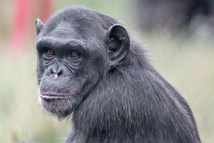 Monkey World Wareham