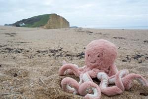 Octopus on West Bay beach