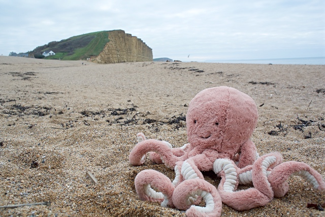 Octopus on West Bay beach