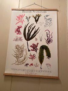 British Seaweeds Poster